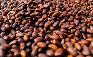 semillas ortodoxas
