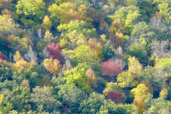 Árboles autóctonos de la península ibérica