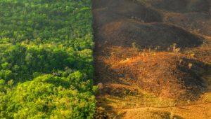restauración parque natural del Estrecho